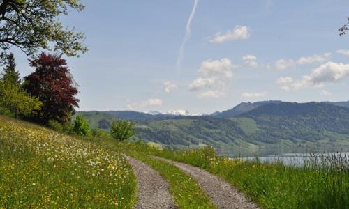 EugenStaub_Weg 5x3