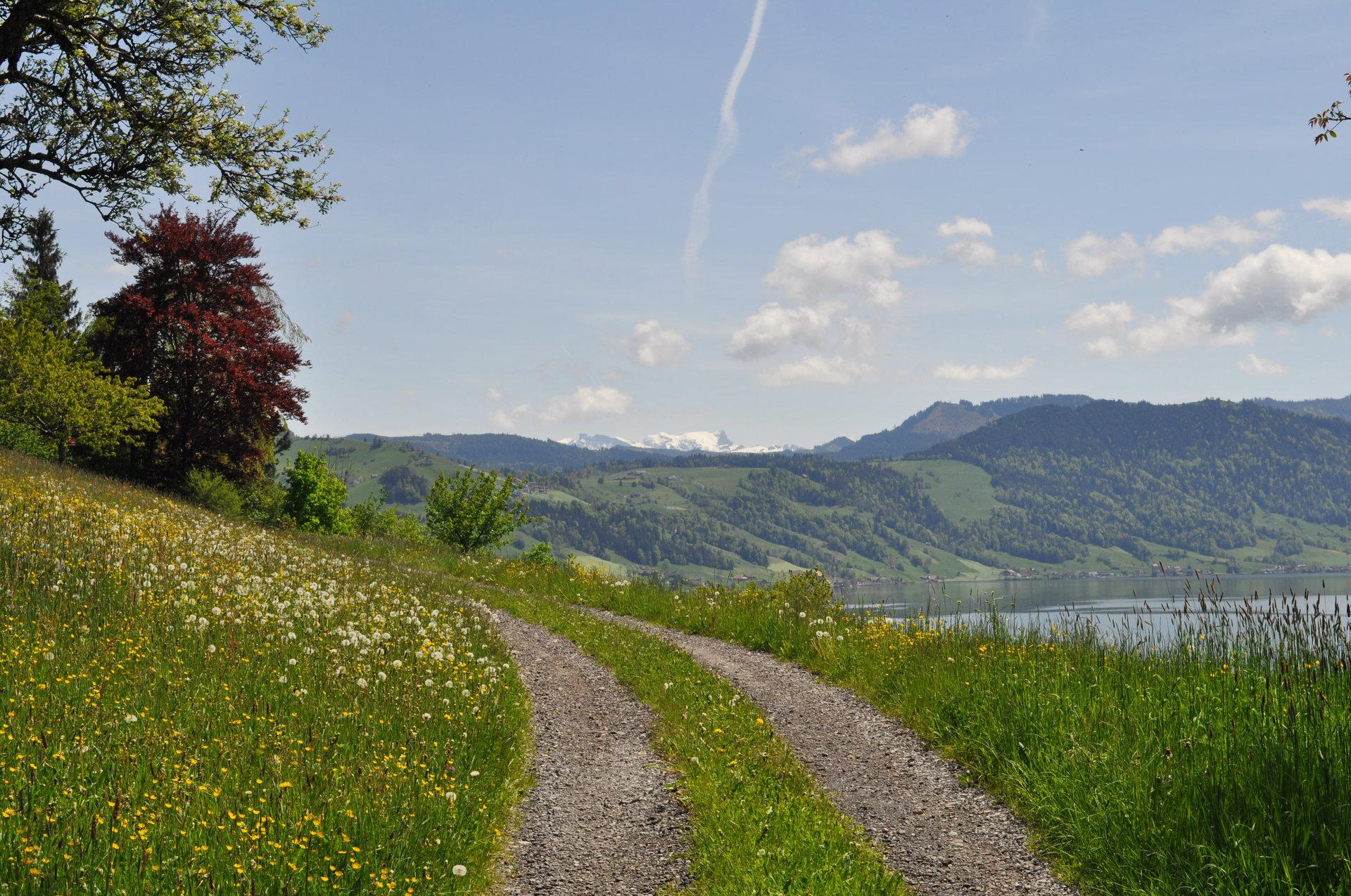 Etat de Vaud: Stimmungsbild am Genfersee zu IT Beratungsprojekt zur Bereinigung von IT- und Netzwerk-Landschaft, Implementation neuer Prozesse